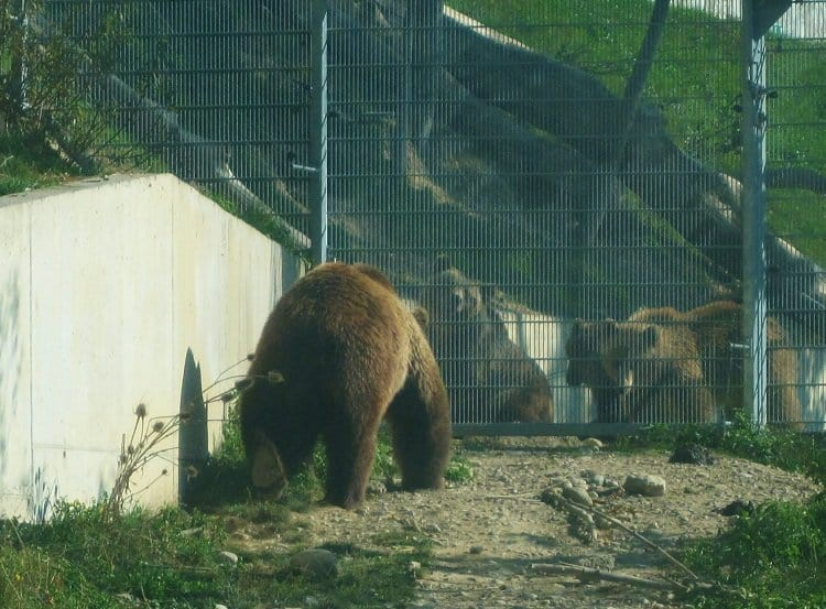 bern bears switzerland