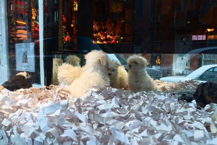 west village puppy shop