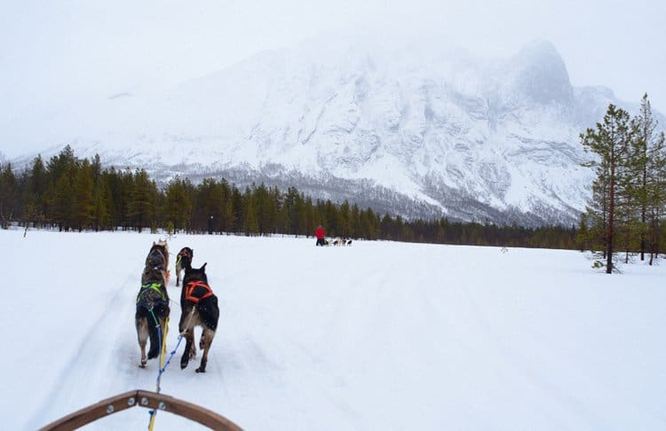 dog sledding scenery