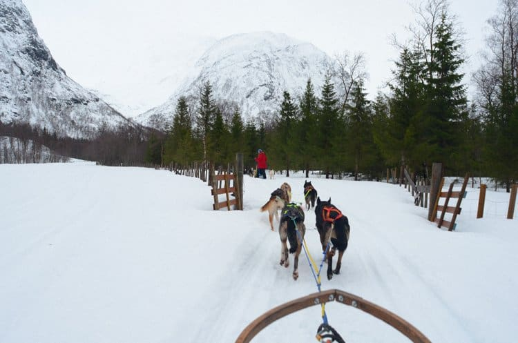dog sledding through woods