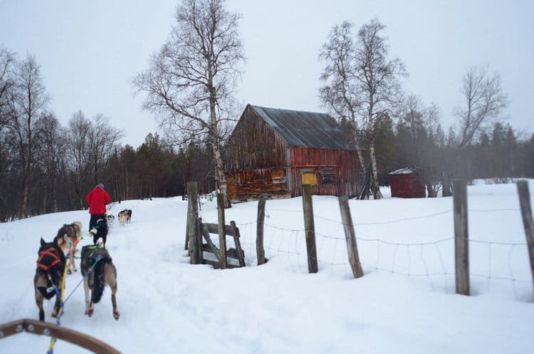 dog sledding norway snow