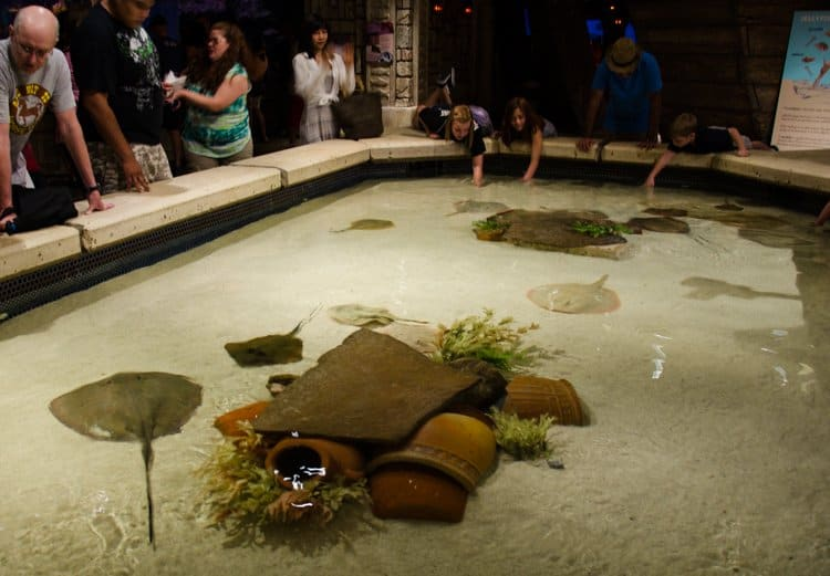 stingray touchpool mandalay bay
