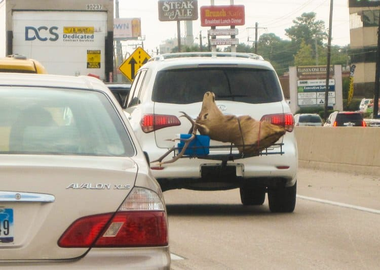 deer head on back of truck