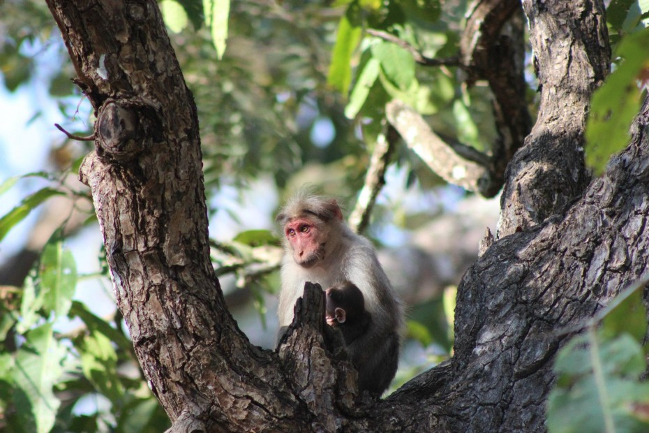monkey-looking-over-the-woods-baby