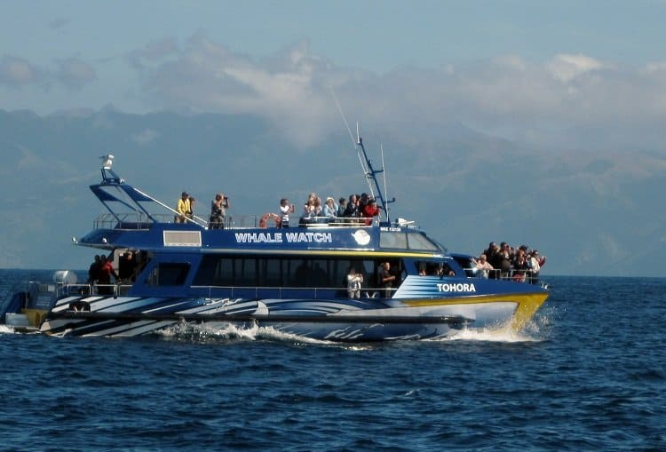 Kaikoura whale watch boat
