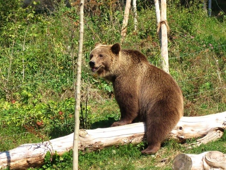 bear bern switzerland
