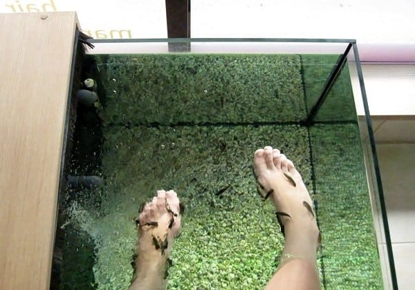fish pedicure spa