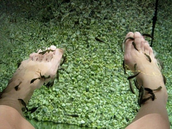 rufa fish pedicure