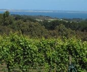 Mornington Peninsula Vines