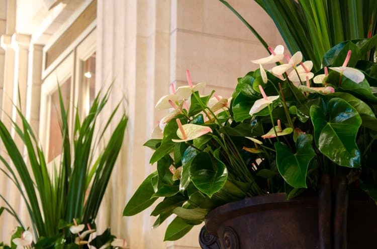 grand hotel de bordeaux and spa flowers