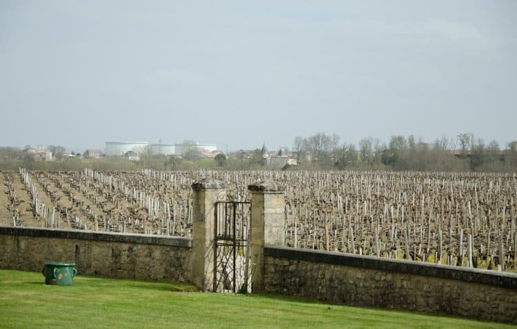 lafon-rochet vineyard