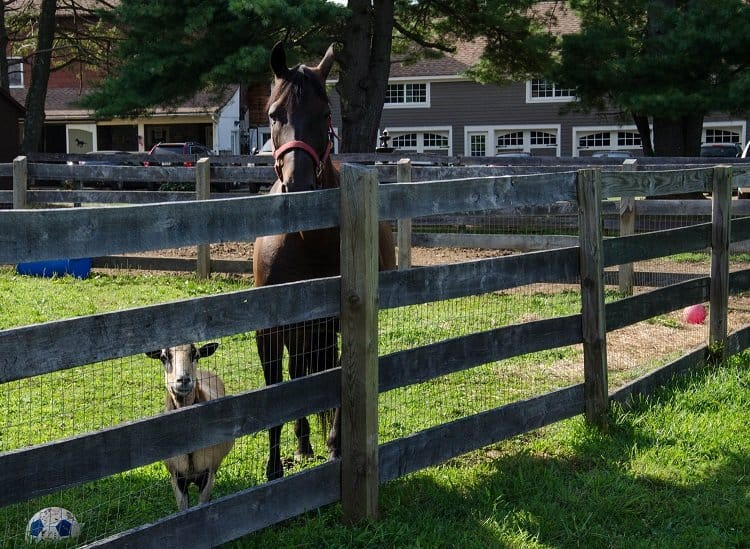 horse and goat new jersey