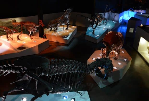 hall of paleontology hmns