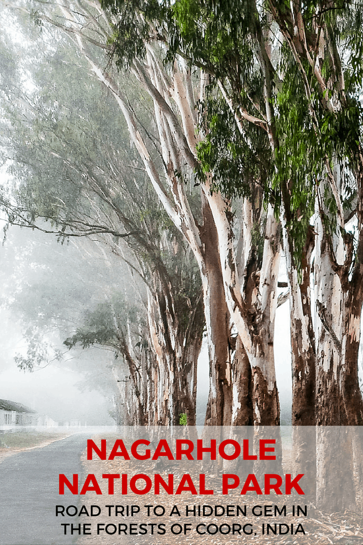 Nagarhole national park, a road trip to a hidden gem in the forests of Coorg, India